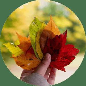 Jeseň je tu, pripravte sa... (1. časť)